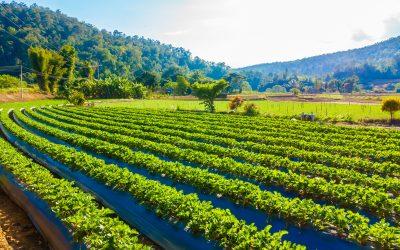 ¿Como solucionar el bombeo de aguas en fincas agrarias donde no llega electricidad?